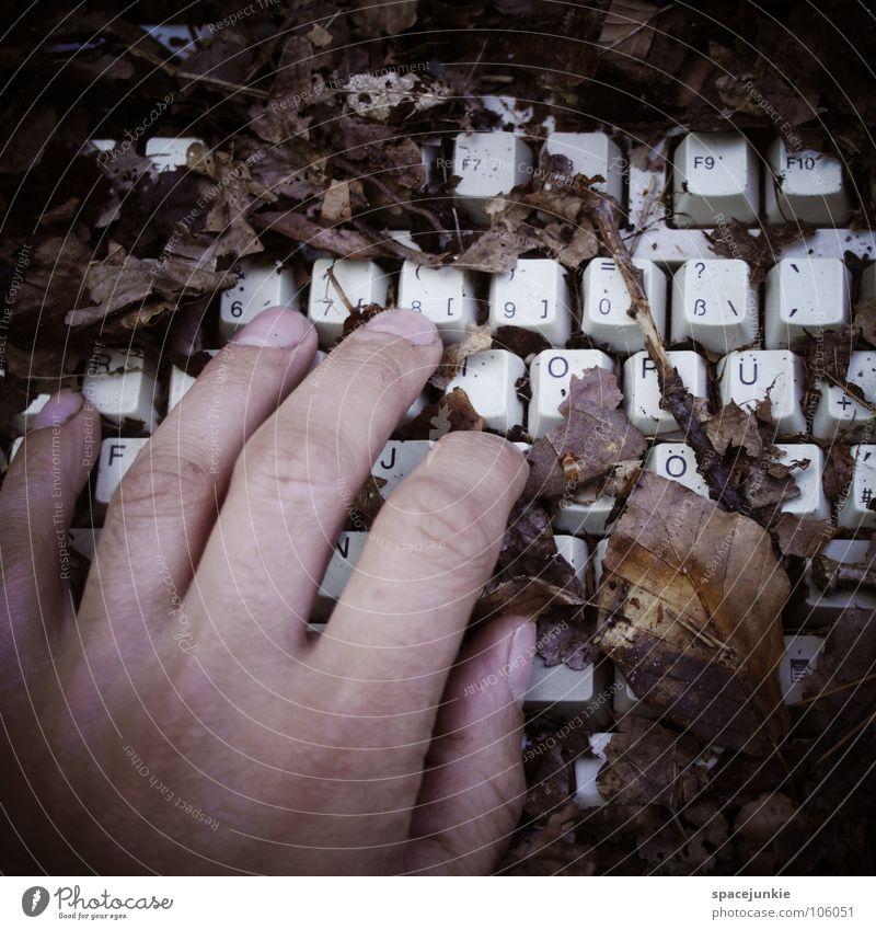 Herbst Natur Hand Baum Freude Blatt Wald Holz Computer braun Internet Bodenbelag Vergänglichkeit Jahreszeiten skurril Computernetzwerk Informationstechnologie