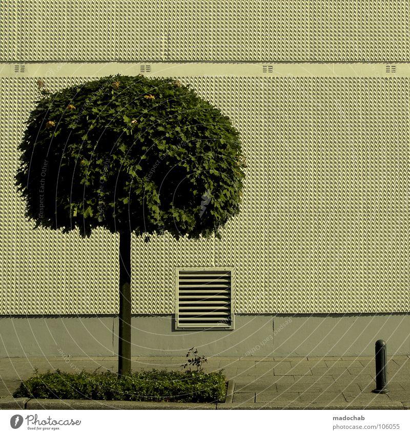 WILDWUCHS Baum Ordnung aufräumen steril graphisch Maske unterwerfen willenlos Grenze beschnitten kürzen Mauer Wand leer Stadt Baumstamm einheitlich 08 15 anonym