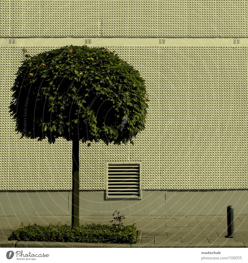 WILDWUCHS Natur Stadt Baum Wand Freiheit grau Mauer Linie Ordnung frei leer trist Maske Klarheit Bürgersteig Grenze
