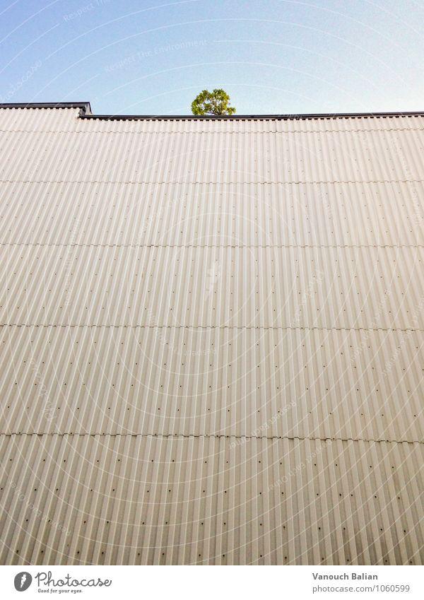 Baum auf Wand Natur Stadt grün Haus gelb Traurigkeit Mauer grau braun Fassade trist gold warten bedrohlich werfen