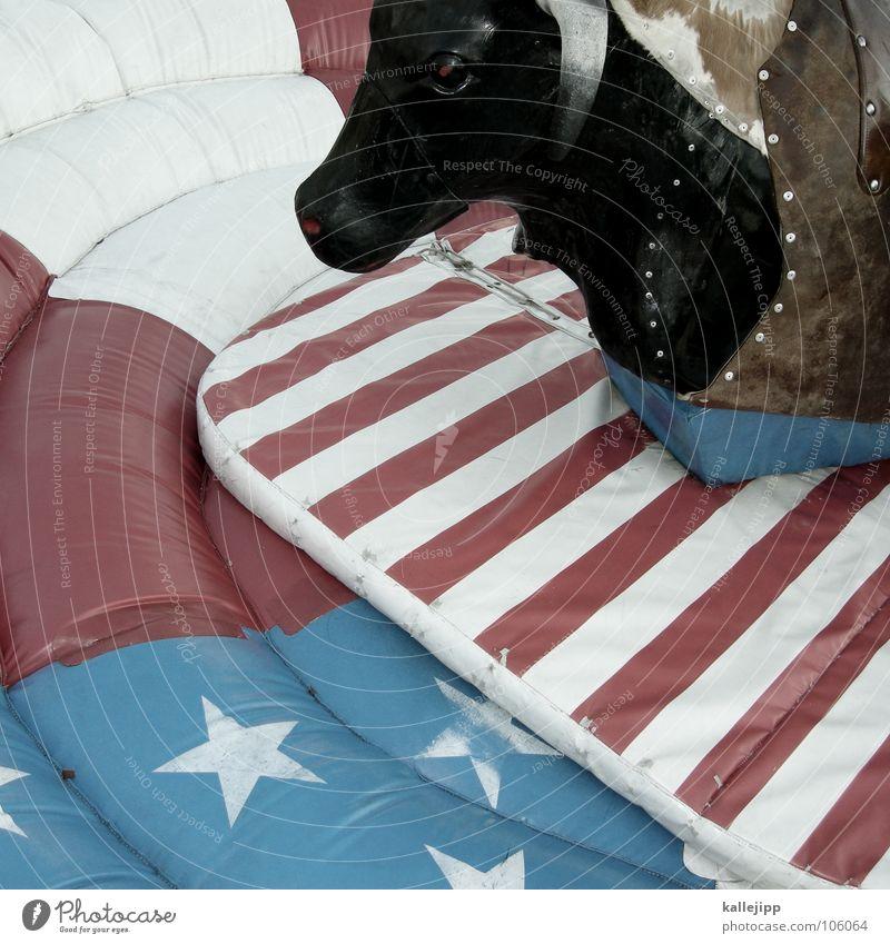 500 jippiyeah! Tier Stern (Symbol) Streifen USA fallen Schutz Jahrmarkt Amerika Entertainment Cowboy Bulle Western Polster Medien beseitigen Wilder Westen
