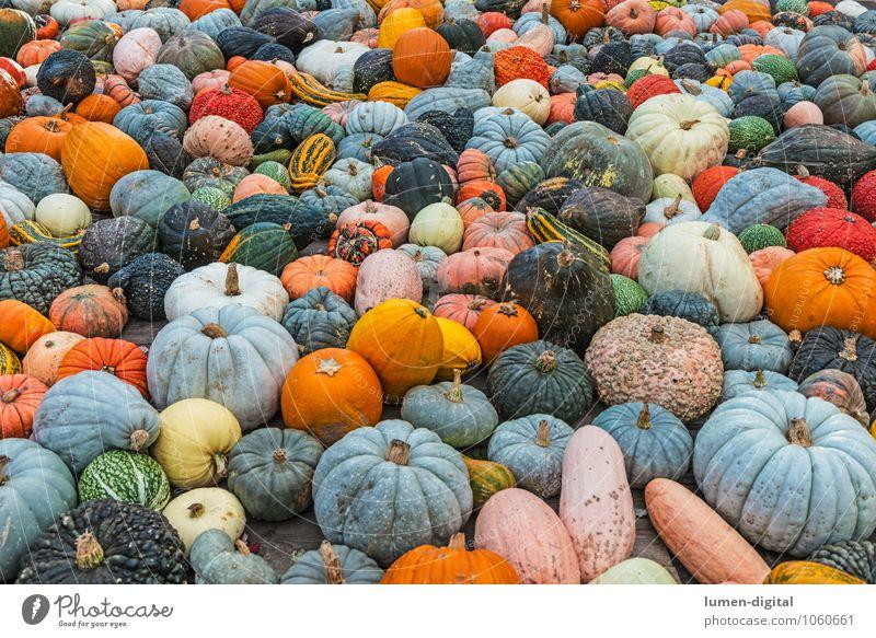 viele bunte Kürbisse Natur blau grün Herbst orange Markt Nutzpflanze Querformat Hokkaido Flaschenkürbis