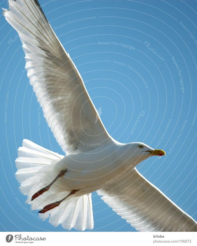 Grenzenlos Himmel blau weiß schön Tier schwarz Freiheit Vogel fliegen elegant hoch frei Unendlichkeit tief Möwe Stolz