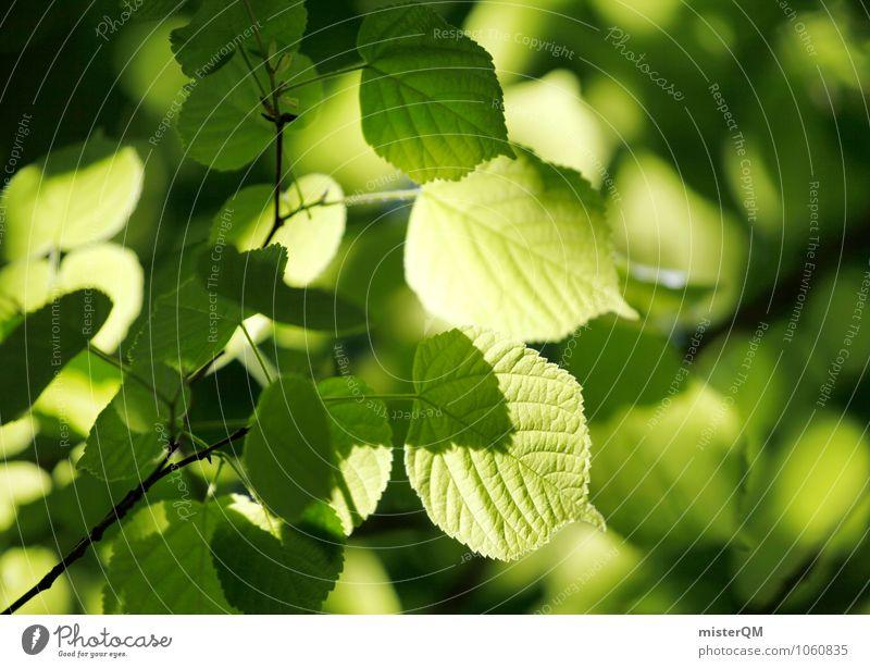Grünes Licht. Umwelt Natur Landschaft Pflanze Schönes Wetter Garten Park ästhetisch grün Grünpflanze Photosynthese Blatt Blätterdach Farbfoto Gedeckte Farben