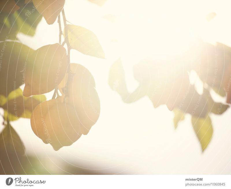 sonnengereift. Natur Pflanze Sommer Sonne Zufriedenheit Wachstum Spanien Mallorca reif Sonnenenergie Zitrone vitaminreich anbauen Vitamin C Arbeit & Erwerbstätigkeit Licht