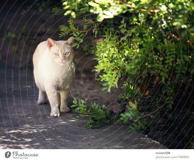 Grüne Miez. Katze Tier Kunst ästhetisch entdecken Haustier Katzenauge Wegrand Katzenkopf Katzenfreund