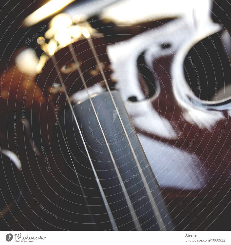 gespannt Musik Konzert Geige Saite Saiteninstrumente Holz Linie braun gold Kraft Kreativität harmonisch Klang musizieren streichen tönen Farbfoto Innenaufnahme