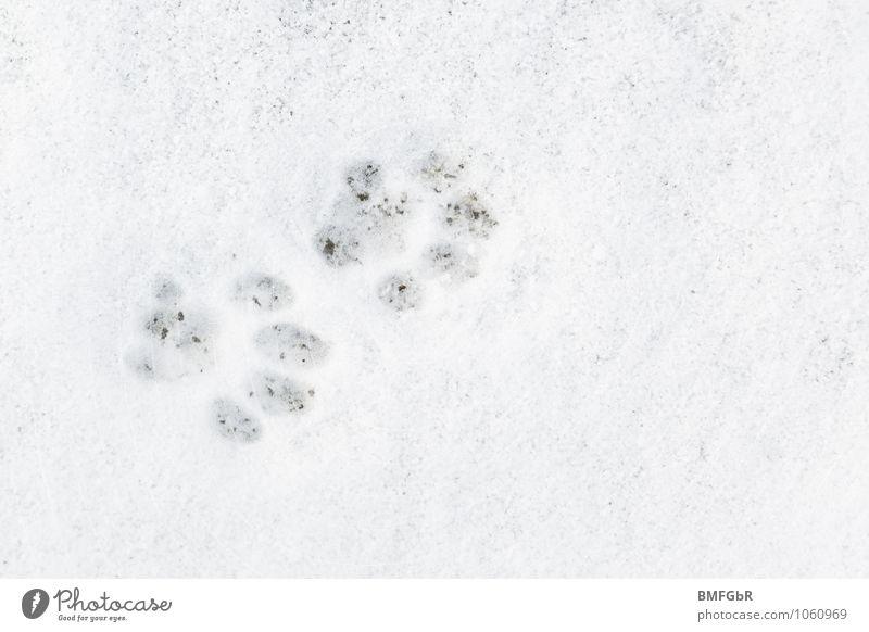 Ich weis was du letzte Nacht getan hast...... Winter Wetter Eis Frost Schnee Tier Haustier Katze Pfote Spuren spurenlesen weiß kalt Neugier Abdruck