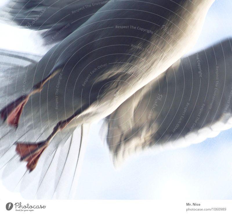 halbes hähnchen Tier Vogel Flügel fliegen Möwe Wildtier Geschwindigkeit grau weiß Kraft Stress Flucht gefiedert Feder kopflos beweglich Aufregung Tierporträt