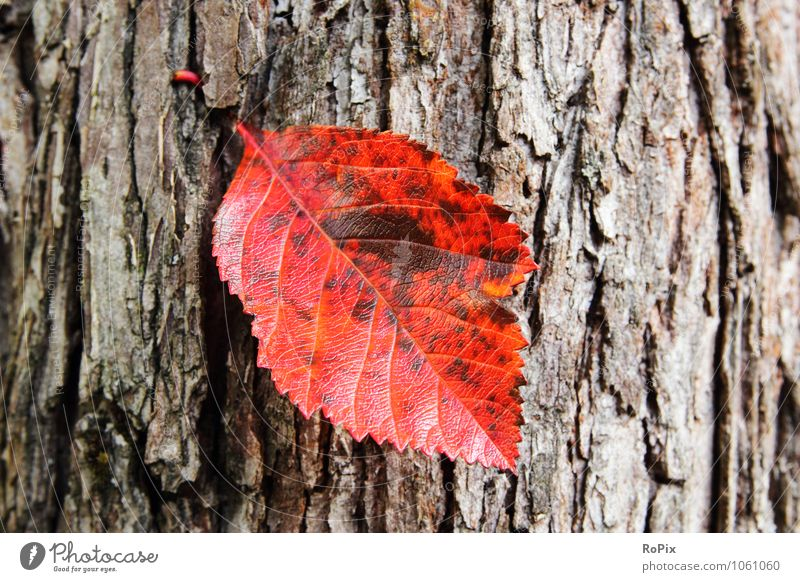 Herbstblatt harmonisch Wohlgefühl Erholung ruhig Meditation Landwirtschaft Forstwirtschaft Ruhestand Umwelt Natur Pflanze Baum Blatt Laub Herbstlaub Rinde Borke