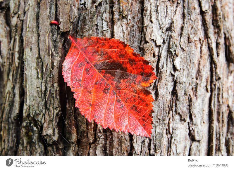 Herbstblatt Natur Pflanze Baum Erholung rot Blatt ruhig Wald Umwelt natürlich Garten glänzend Park Wachstum ästhetisch