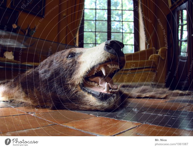 bärbel Freizeit & Hobby Jagd Häusliches Leben Wohnung einrichten Innenarchitektur Dekoration & Verzierung Möbel Wildtier Totes Tier Tiergesicht Fell trashig