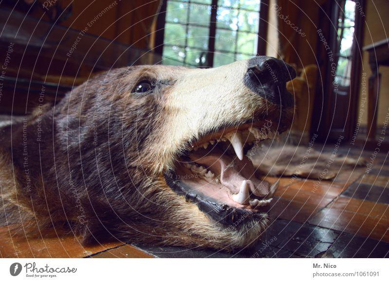 BÄRBEL Freizeit & Hobby Jagd Häusliches Leben Wohnung einrichten Innenarchitektur Dekoration & Verzierung Möbel Raum Wohnzimmer Wildtier Totes Tier Fell braun