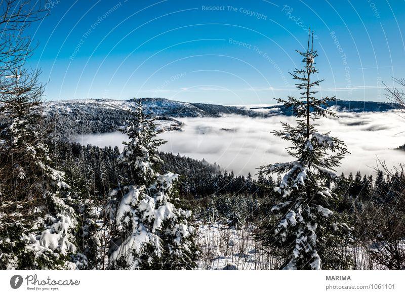 winter hike in the northern Black Forest on a sunny day Natur weiß Baum Landschaft ruhig Wolken Winter schwarz Wald kalt Umwelt Berge u. Gebirge grau Tourismus