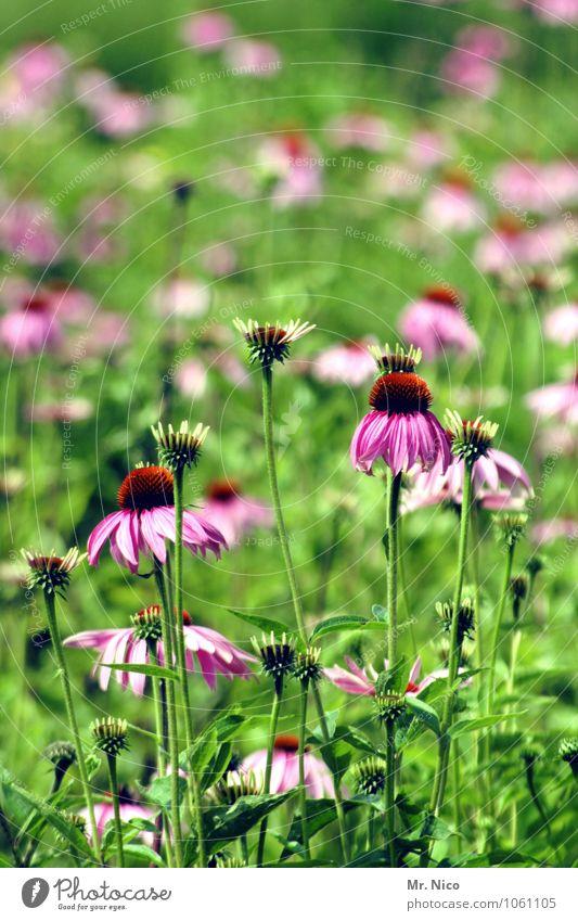 dufte Natur Pflanze grün Sommer rot Blume Umwelt Gras Frühling Gesundheit Garten Wachstum frisch zart violett Stengel