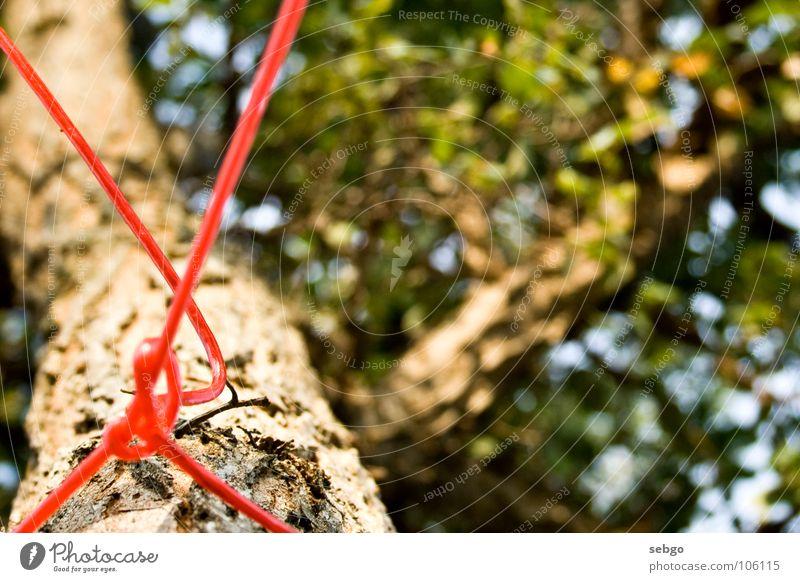 Freestyle-Knoten Baum Blatt grün rot Schnur Wäscheleine Sommer Ast Seil Baumstamm