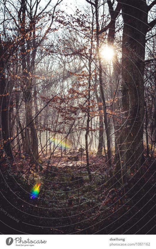 herbstlicht. Natur Landschaft Pflanze Sonne Herbst Schönes Wetter Baum Sträucher Wald Duft kalt nachhaltig natürlich wild blau braun Zufriedenheit Erholung