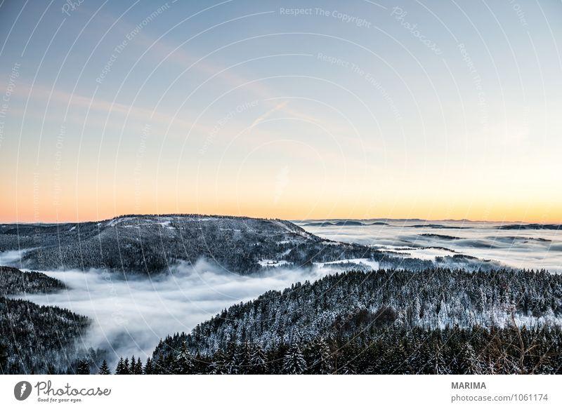 winter hike in the northern Black Forest on a sunny day ruhig Tourismus Winter Berge u. Gebirge Umwelt Natur Landschaft Baum Wald Hügel kalt grau schwarz weiß