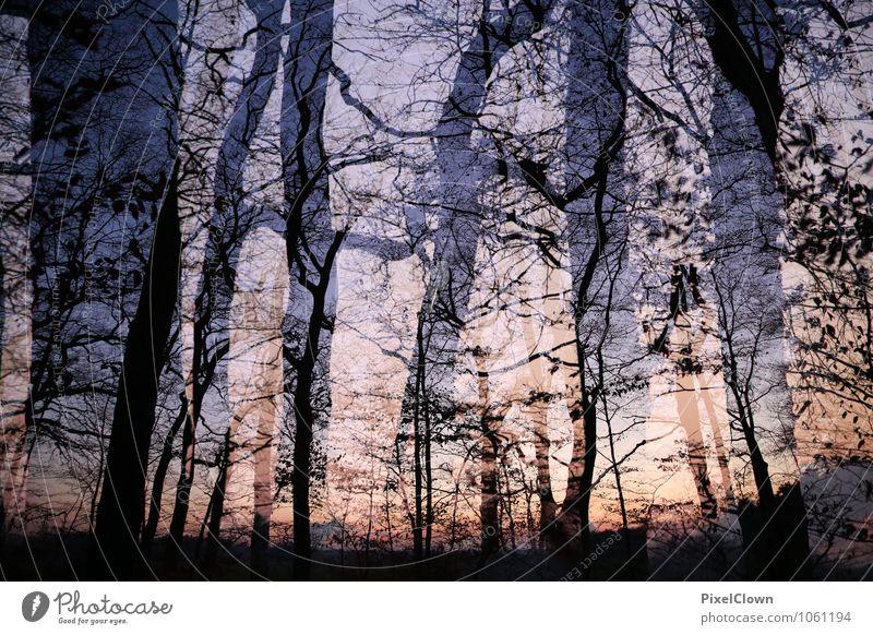 Sonnenuntergang Natur Ferien & Urlaub & Reisen Pflanze Landschaft Tier dunkel Wald Umwelt Gefühle Stil Holz Kunst braun Stimmung Horizont Design