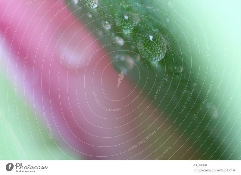 Shades of spring schön Körperpflege Gesundheit Wellness harmonisch Kur Spa Hochzeit Natur Pflanze Wasser Wassertropfen Frühling Sommer Regen Blume Blatt Blüte