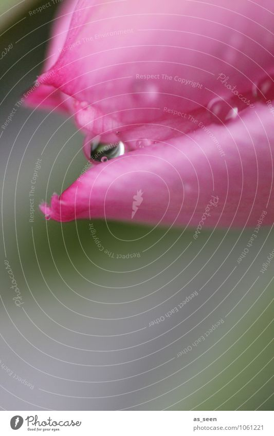 Pink blossom Natur schön Farbe Wasser Blume Umwelt Blüte natürlich Garten rosa Lifestyle glänzend Regen elegant frisch ästhetisch