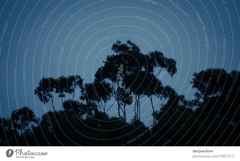 Zeit der Fledermäuse Natur blau Sommer Baum Erholung ruhig schwarz Holz außergewöhnlich Idylle ästhetisch fantastisch Ausflug beobachten Schönes Wetter Romantik