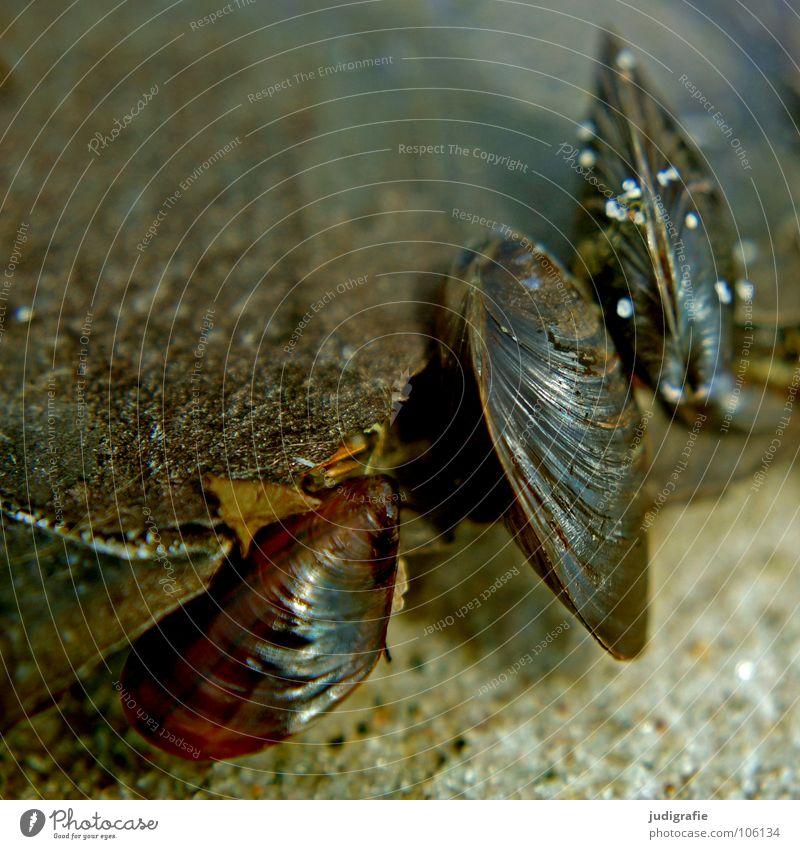 Drei Muschel Miesmuschel Strand See Meer Baumrinde Holz 3 Farbe Fisch Sand Ostsee Natur Strukturen & Formen Leben Feste & Feiern