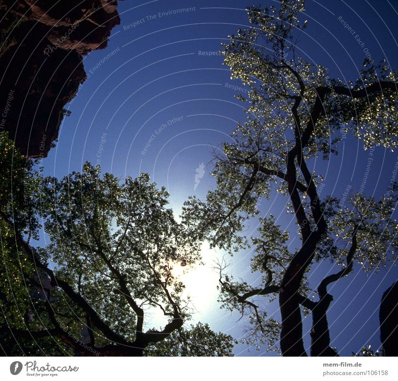 zur sonne Licht Baum Blatt eigenwillig Vernetzung Wald Umwelt Baumrinde Geäst durcheinander grün Sommer Frühling Mount Eden Götter gelb Vertrauen Sonne Ast