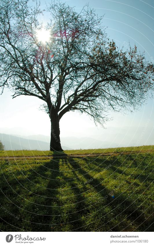Altweibersommer Licht Sonnenstrahlen Gegenlicht Wiese Baum Herbst schön grün Hügel Schwarzwald Himmelskörper & Weltall blau Nebel Schatten Natur Außenaufnahme