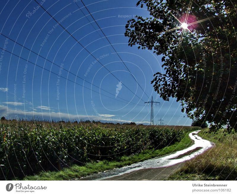 Energieträger Natur Baum Sonne blau Pflanze Wege & Pfade Landschaft Beleuchtung Feld glänzend wandern Umwelt nass Industrie Energiewirtschaft Elektrizität
