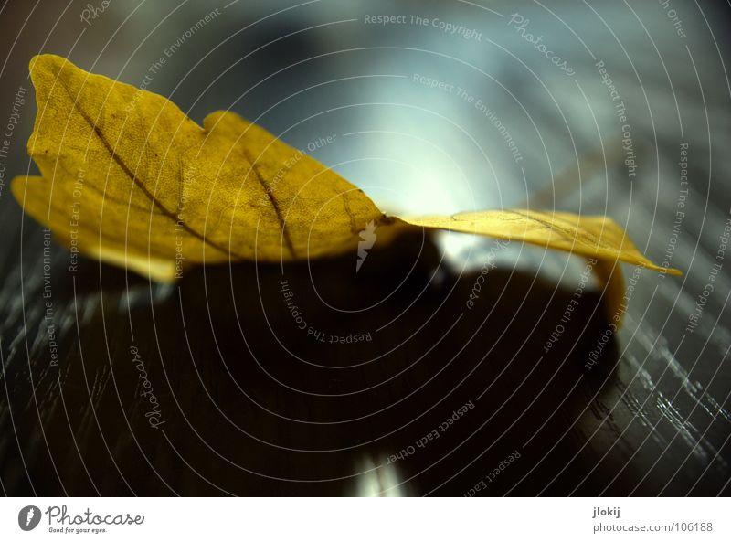Autumn Structures Herbst Blatt Gefäße gelb schwarz Tisch Muster Licht Ahorn Holz mehrfarbig Pflanze Baum Vergänglichkeit Maserung autumn leaf black table