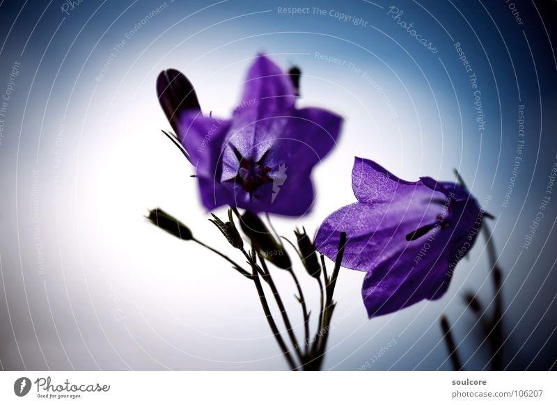 Tender Floret Küste Wolken Blume Makroaufnahme Nahaufnahme Kiel Wind Farbe Unschärfe