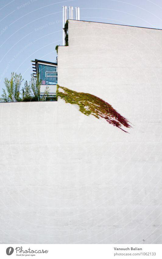 Quergewächs Stadt Pflanze Wand grau trist modern Terrasse herbstlich Schornstein kahl Herbstfärbung Herbstbeginn Efeu Gewächshaus Modernismus Moderne Architektur