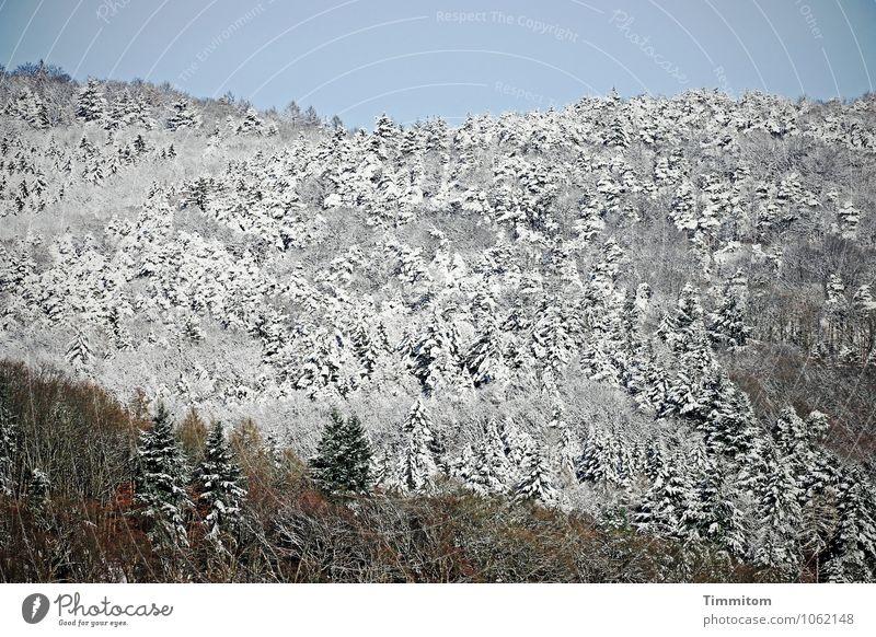 Es wäre jetzt gut - 2 Umwelt Natur Landschaft Pflanze Wolkenloser Himmel Winter Schönes Wetter Eis Frost Schnee Wald ästhetisch frisch natürlich blau braun grau