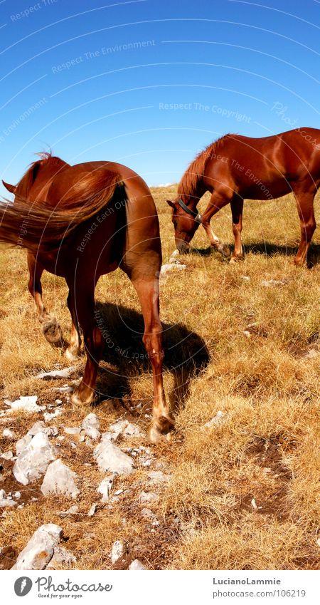 Pollino Natur Himmel Berge u. Gebirge Pferd Amerika