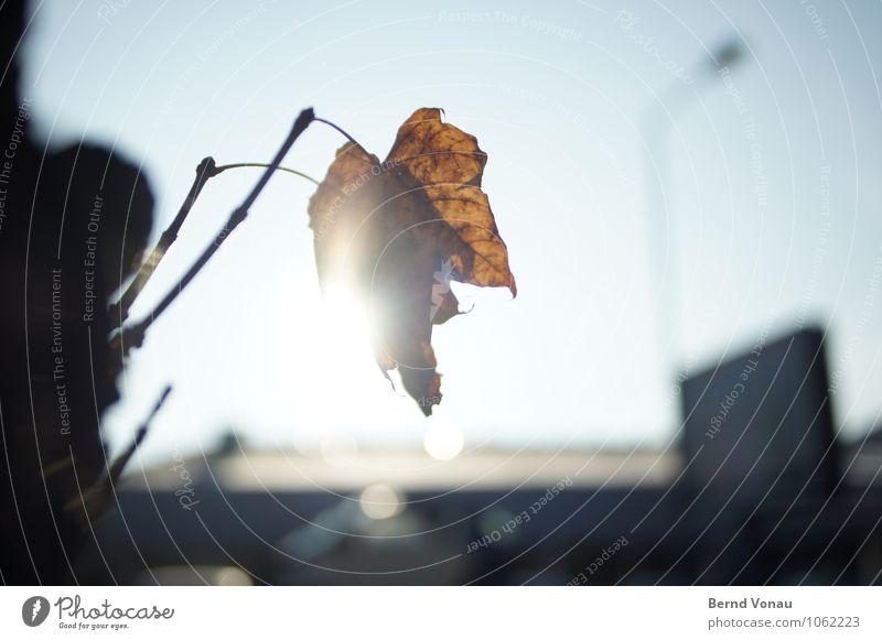 nachruf schön Sonne Lampe Himmel Herbst Wärme Baum Blatt Gebäude hell blau braun Tod Herbstlaub blenden einzeln Ast Beleuchtung Blattadern durchsichtig Farbfoto