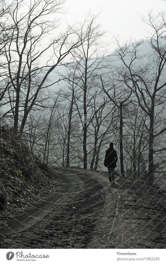 Goldlöckchen. Mensch Frau Natur Baum Landschaft dunkel Umwelt Erwachsene Gefühle natürlich Wege & Pfade grau braun gehen Ast Hügel