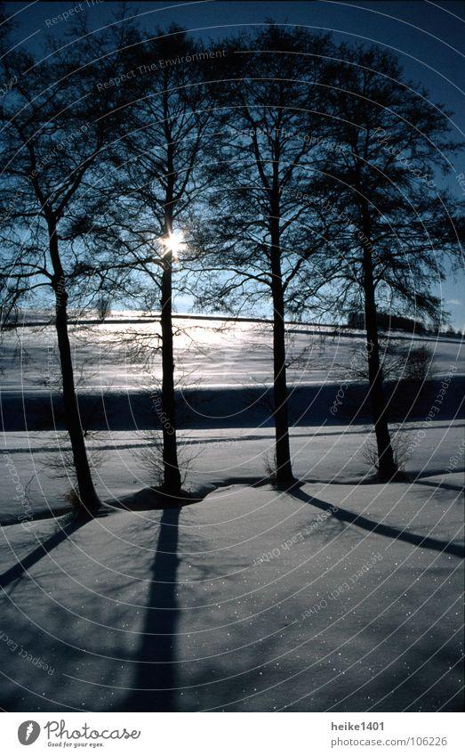 Wintersonne Baum Birke Einsamkeit Sonne Sonnenaufgang Morgen Januar Gegenlicht gefroren kalt Ferne bedrohlich dunkel Außenaufnahme Schnee Himmel Schönes Wetter