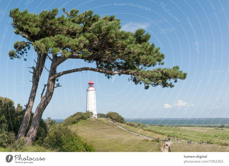 Kiefer mit Leuchtturm auf Hiddensee Natur Wolken Horizont Sommer Schönes Wetter Baum Küste Ostsee Turm Wahrzeichen maritim blau Seezeichen Signal Himmel