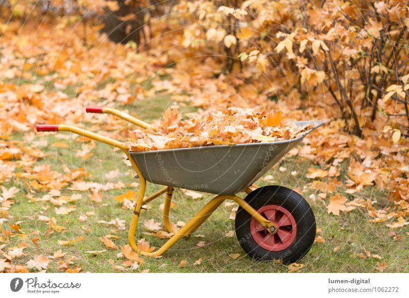 Schubkarre mit Laub im Herbst Garten Arbeit & Erwerbstätigkeit Gartenarbeit Sträucher Blatt Wiese Reinigen Sauberkeit gelb Ordnungsliebe Umwelt Umweltschutz
