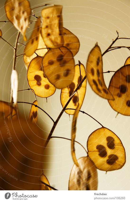 Der Chips-Baum Blatt Lichtspiel gelb rund Gelbstich Beleuchtung schimmern Wand Farbverlauf Verlauf gepunktet getrocknet trocken Dekoration & Verzierung filigran