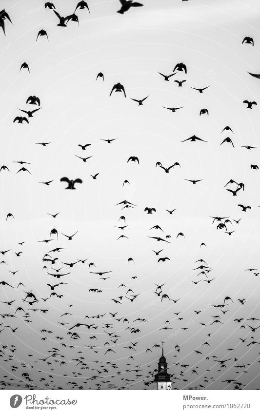 die vögel Himmel (Jenseits) Tier Religion & Glaube fliegen Vogel gruselig Flucht Schwarm Kirchturm Horrorfilm