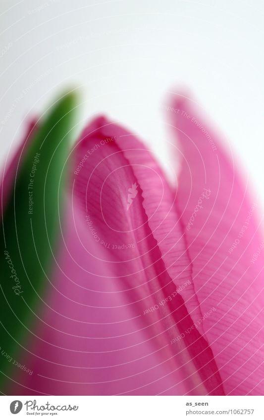 Erwartung Natur grün schön Farbe Blume Erotik Blatt Leben Blüte Frühling natürlich rosa Design Wachstum leuchten elegant