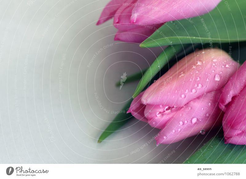 Blumengruß Natur Pflanze grün Sommer Blatt Umwelt Blüte Gefühle Frühling Feste & Feiern hell rosa glänzend Design Wachstum