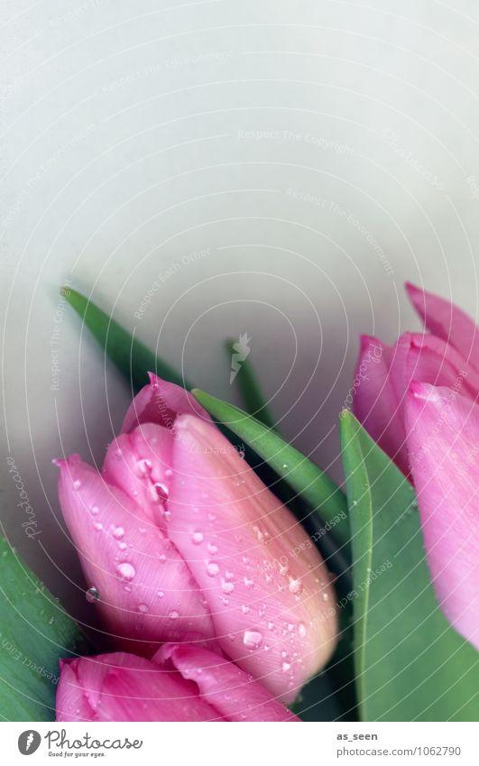 Frühlingsgrüße Natur Pflanze grün Farbe Blume Blatt Freude Leben Blüte Gesundheit Lifestyle Feste & Feiern rosa glänzend Wachstum