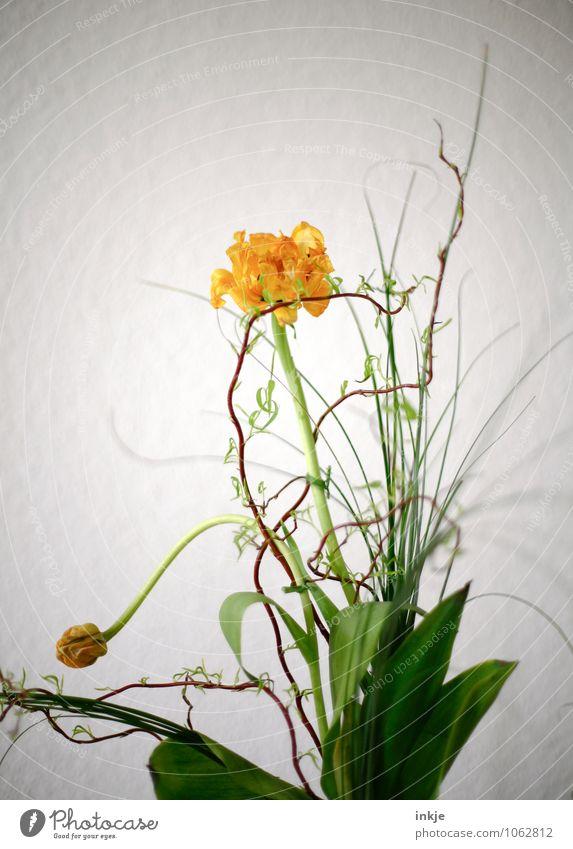 Frühling Stil Häusliches Leben Wohnung Dekoration & Verzierung Blume Tulpe Korkenzieher-Weide Blumenstrauß Schnörkel Blühend stehen hell schön gelb grün weiß
