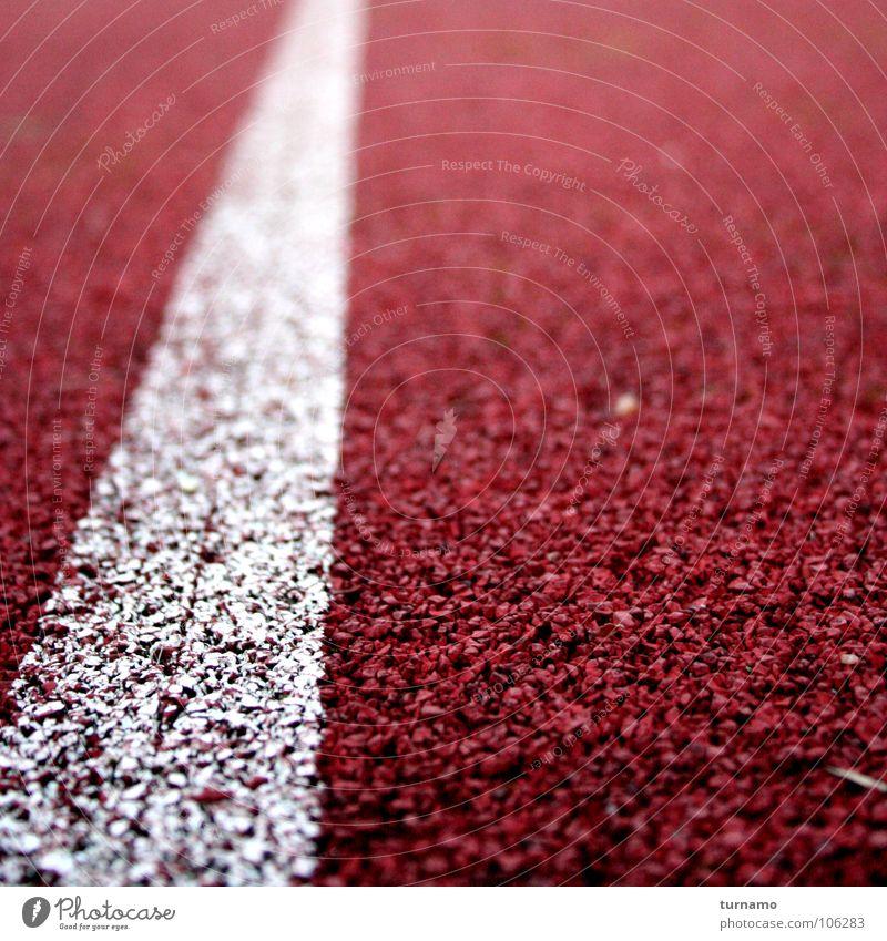 und bald am Ziel Farbfoto Außenaufnahme Morgendämmerung Sport Leichtathletik Sportveranstaltung Rennbahn laufen Geschwindigkeit rot Erfolg Willensstärke
