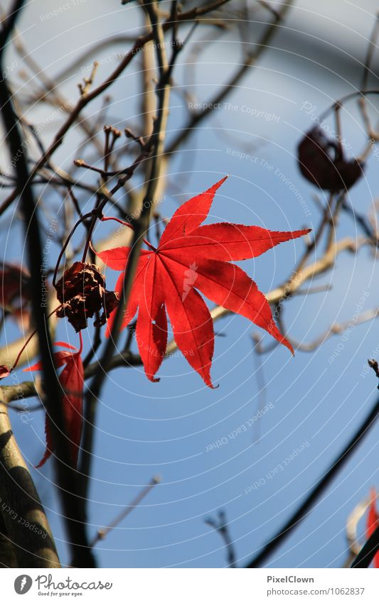 Standhaftes Blattwerk Natur Pflanze schön Farbe Baum rot Landschaft Tier Wald Gefühle Herbst Stil Glück Holz Garten