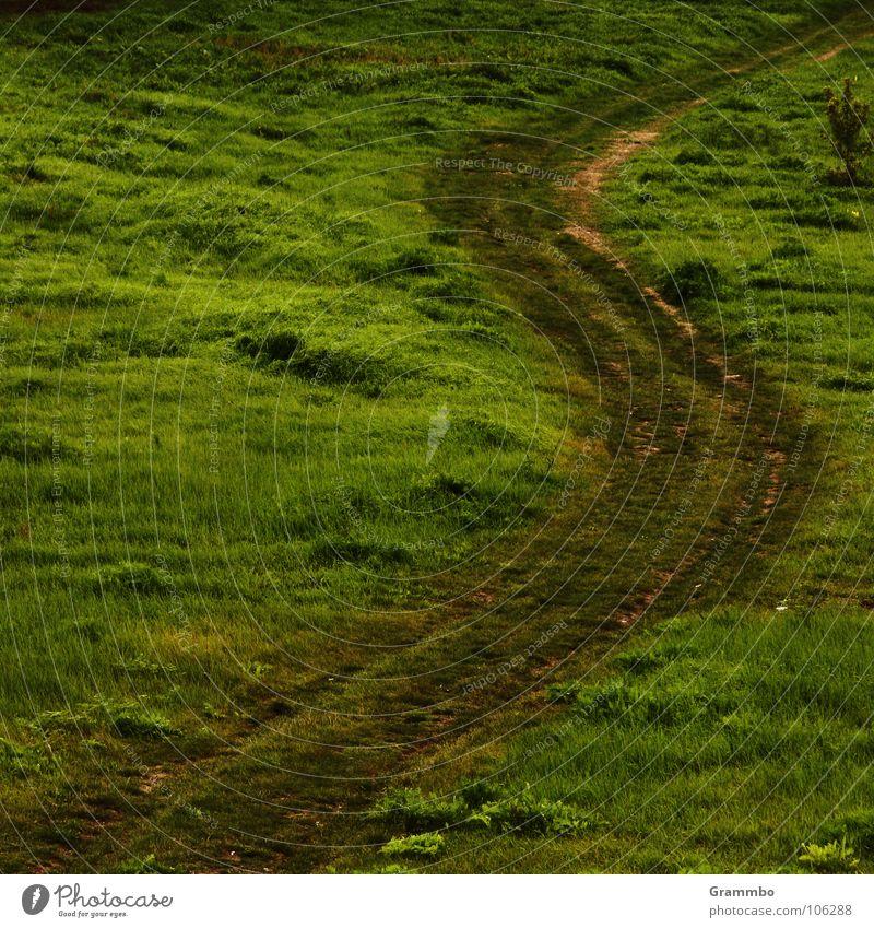 Die kürzeste Verbindung zwischen zwei Punkten ist ... grün Sommer Wiese Gras Wege & Pfade Kurve biegen Stoppel Magdeburg