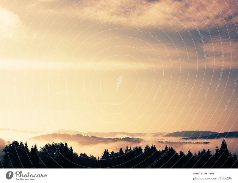 Ganz früh morgens... Cross Processing Grünstich Gelbstich Wolken Sonnenaufgang Baum Wald Baumkrone Nebel Hügel schön Märchen Märchenlandschaft träumen Himmel